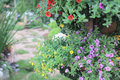 Landscaped flower garden at hk Royalty Free Stock Photo