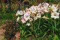 Landscaped Flower