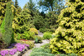 Landscaped garden of coniferous plants Royalty Free Stock Photos