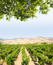 Landscaped for vineyard Stock Images