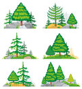 Landscapes with coniferous trees, grass and stones. Vector set