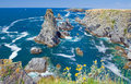 Landscapes of the famous place aiguilles de port coton image yellow flowers in places on island belle ile en mer with waves Stock Photo