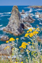 Landscapes of the famous place aiguilles de port coton image yellow flowers in places on island belle ile en mer with waves Stock Images