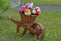 Landscaping flowers in wheel barrow planter home hand made Royalty Free Stock Photo