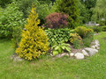 Landscaping With A Thuja Golden