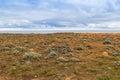Landschaft der küstenklippe bei versteinertem forest walk kap brücke Stockbilder