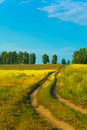 Lane in meadow and deep blue sky Royalty Free Stock Photography
