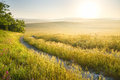 Lane in meadow and sunrise nature design Royalty Free Stock Photography