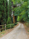 Laneway through the forest gravel leads in tuscany italy Stock Image