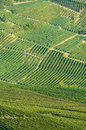 The langhe panoramic view of vineyards in Stock Image