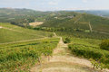 The langhe panoramic view of vineyards in Stock Photo
