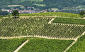 Langhe vineyards asti cuneo piedmont italy landscape at summer with Royalty Free Stock Image
