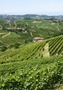 Langhe vineyards asti cuneo piedmont italy landscape at summer with Royalty Free Stock Photo