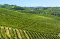 Langhe vineyards asti cuneo piedmont italy landscape at summer with Stock Photography