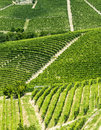 Langhe vineyards asti cuneo piedmont italy landscape at summer with Royalty Free Stock Photos