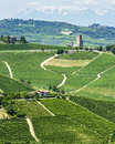 Langhe winnicy Obraz Royalty Free