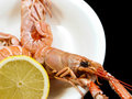 Langoustine prepared on a white plate with lemon towards black background Stock Images