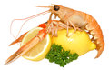 Langoustine shellfish a single with lemon and parsley garnish isolated on a white background Royalty Free Stock Image
