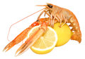 Langoustine shellfish a single with lemons isolated on a white background Stock Photography