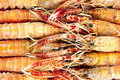 Langoustines Royalty Free Stock Photo