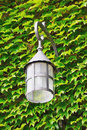 Lantern old on the wall with green leaves Royalty Free Stock Images