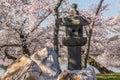 Lanterna japonesa nas flores de washington Imagem de Stock