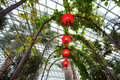 Lanterns hanging under walkway within the flower dome of gardens by the bay singapore chinese Stock Images