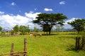 Lao Farm. Royalty Free Stock Photo