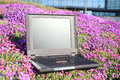Laptop on flowers Royalty Free Stock Photos