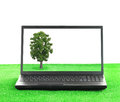 Laptop on the grass with a tree Royalty Free Stock Photo