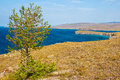 Larch and lake Baikal in summer, the island of Olkhon. Royalty Free Stock Photo