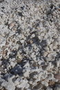 Large amount of coral and shells Royalty Free Stock Photo