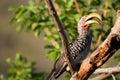 Large Beak Bird Stock Images