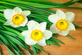 Large blossoming narcissuses on a table bouquet of wooden surface of Royalty Free Stock Image