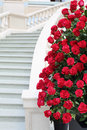 Large bright bouquet of roses near staircase red white marble Stock Photos