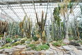 Large cacti hall exhibiting drought tolerant plants in munich botanical garden germany Stock Photography