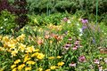 A large collection of summer flowers, daylilies, rudbeckia, phloxes, echinacea in the garden. Royalty Free Stock Photo