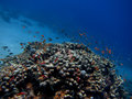Colorful coral reef with many fishes Royalty Free Stock Photo
