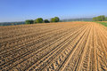 Large cultivate field Royalty Free Stock Photo