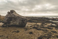 Large Driftwood Stump on Rocky Beach Royalty Free Stock Photo