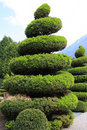 Large evergreen topiary Stock Photos