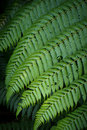 Large fern leaf Royalty Free Stock Images