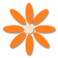 Large flower with orange petals on a white background Stock Images