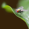 Large fly on green leaf a Royalty Free Stock Photos