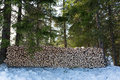 Large freshly chopped wood pile in the shade forest north of oslo Stock Photo