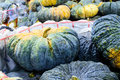 A large Green Pumpkin. Royalty Free Stock Images