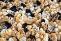 Large group of newly hatched chicks on a chicken farm. Royalty Free Stock Photo