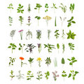 Large Herb Leaf and Flower Collection Royalty Free Stock Photography