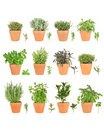 Large Herb Selection in Pots Stock Photo