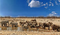 Large herd of elephants at a waterhole with a vibrant blue sky in Etosha National Park, Namibia Royalty Free Stock Photo